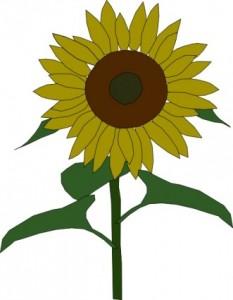 sun_flower_clip_art_11537